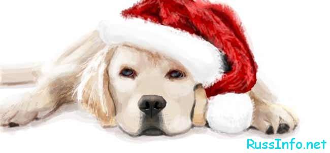 собака в новогодней шапке