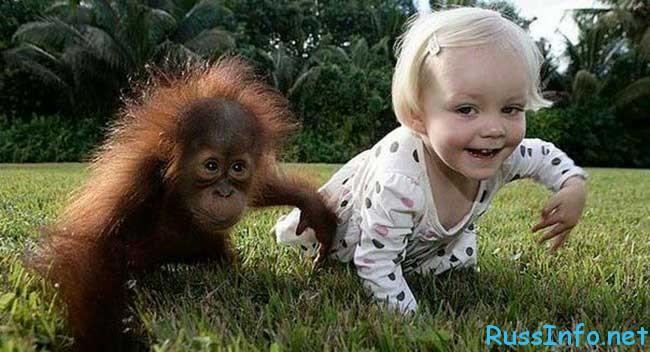 Год обезьяны какие это люди