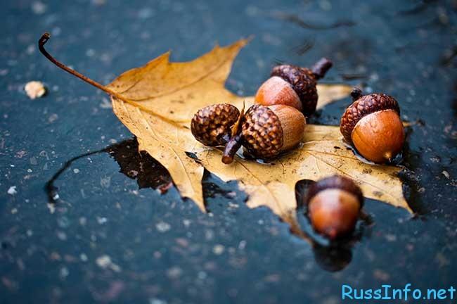 Придет осень за все спросит картинки