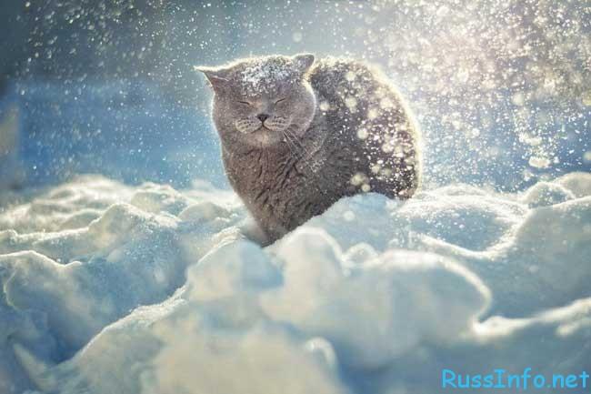когда будет зима в 2018 году в России