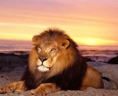 любовный гороскоп 2016 для мужчины Льва