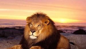любовный гороскоп 2018 для мужчины Льва
