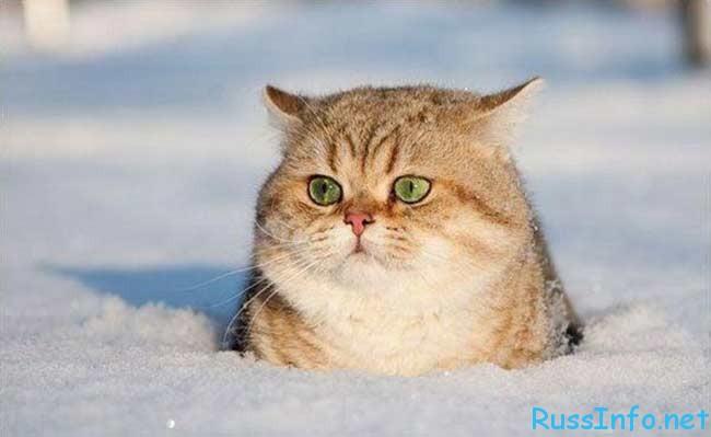 какая будет зима 2017-2018 в Волгограде по прогнозам синоптиков