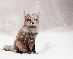 какой будет зима 2019-2020 в Краснодаре