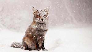 какой будет зима 2017-2018 в Краснодаре