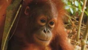 какого цвета обезьяна в 2016 году