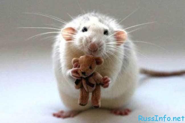 Гороскоп Крысы на Январь 2018