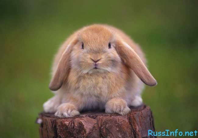гороскоп мужчины Кролика на 2018 год