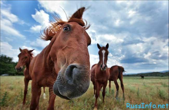 Мужчина-Весы, рожденный в год Лошади, в Постели
