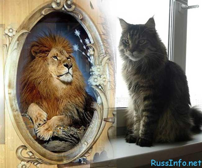 гороскоп для Льва на февраль