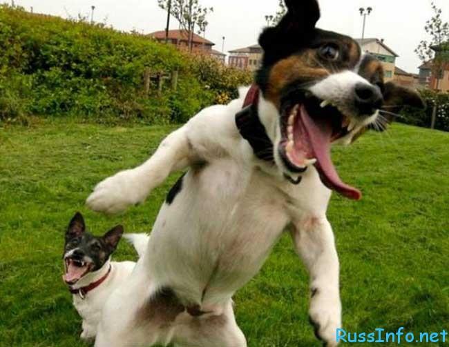 китайский гороскоп на  2016 года для Собаки