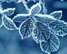 Гидрометцентр о том какой будет зима 2020 в Санкт-Петербурге