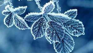 Гидрометцентр о том какой будет зима 2015-2016 в Санкт-Петербурге