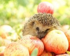 традиции празднования Яблочного Спаса