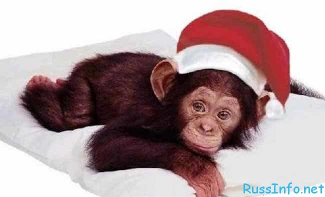 красная огненная обезьяна - символ 2016 года