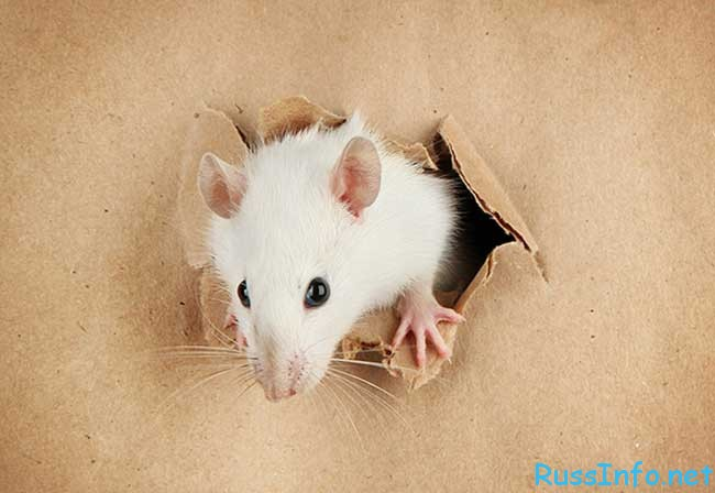 гороскоп мужчины Крысы на 2020 год