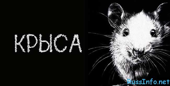 восточный гороскоп на 2020 год Крыса
