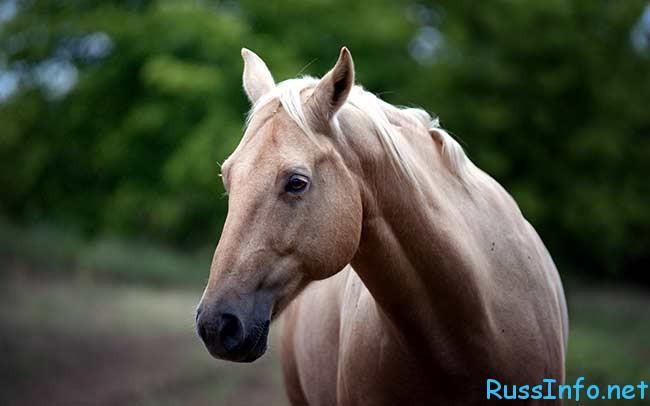 восточный гороскоп на 2018 год Лошадь