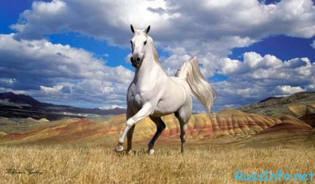 китайский гороскоп на 2018 год для Лошади