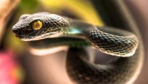 гороскоп мужчины Змеи на 2018 года