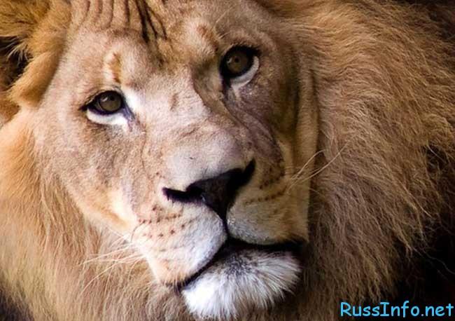 финансовый гороскоп на март 2019 для Льва