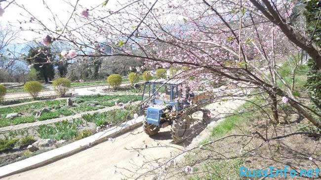 лунный посевной календарь садовода-огородника на март 2018 года
