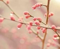 ветка дерева в апреле