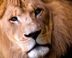 финансовый гороскоп на июнь 2017 для Льва