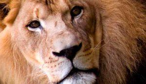 финансовый гороскоп на июнь 2018 для Льва