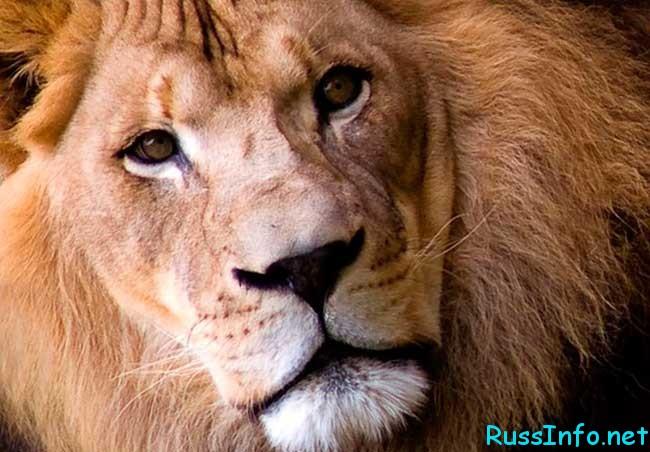 гороскоп знакомств для льва
