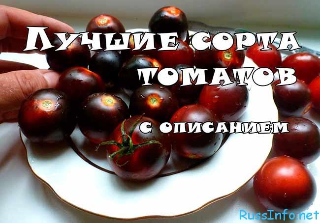 новые сорта томатов сибирской селекции на 2018 год