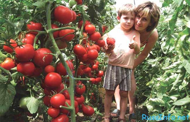 самые урожайные сорта томатов на 2018 год, семена