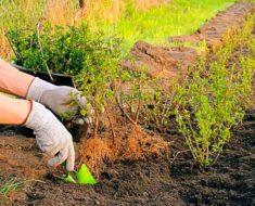 посевной лунный календарь огородника и садовода на май