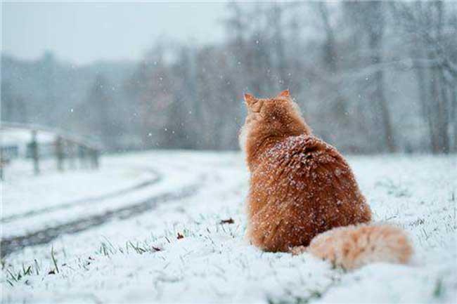 какая ожидается зима 2019 года