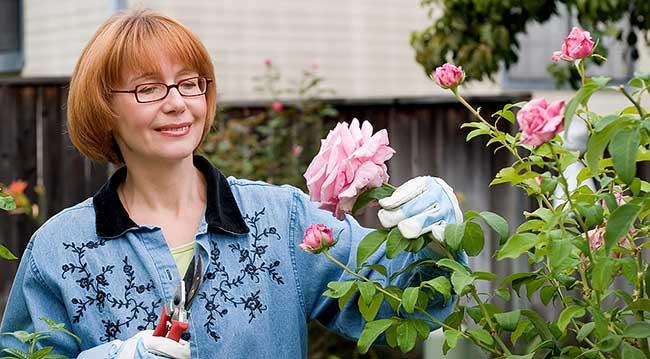 посевной лунный календарь огородника и садовода на июнь