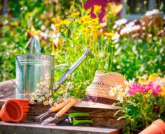 посевной лунный календарь огородника и садовода на август