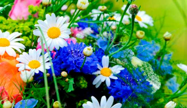 лунный посевной календарь садовода-огородника на июль 2018 года