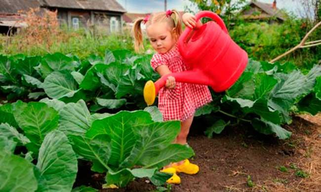 посевной лунный календарь огородника и садовода на июль