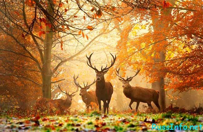 когда наступит осень