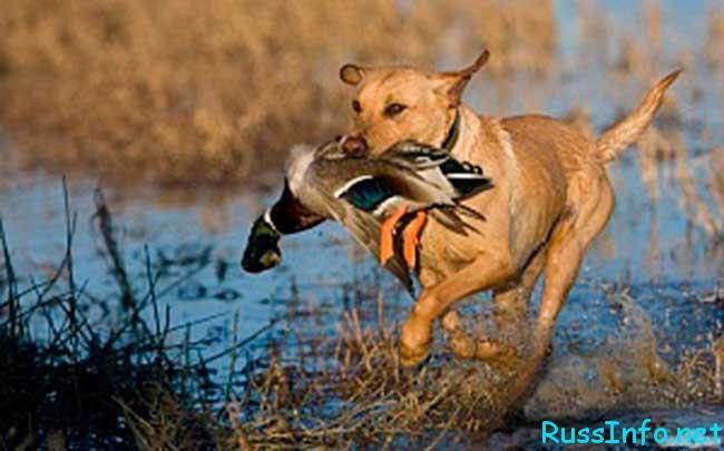 открытие Весенней охоты в 2019 году