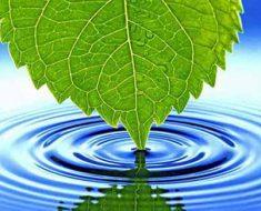лист в воде