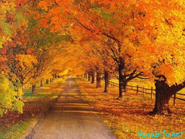 желтые листья на деревьях