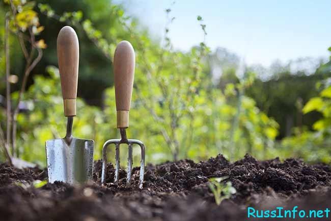 посевной лунный календарь огородника и садовода на сентябрь