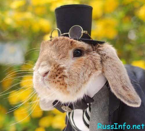 Кролик. Восточный гороскоп