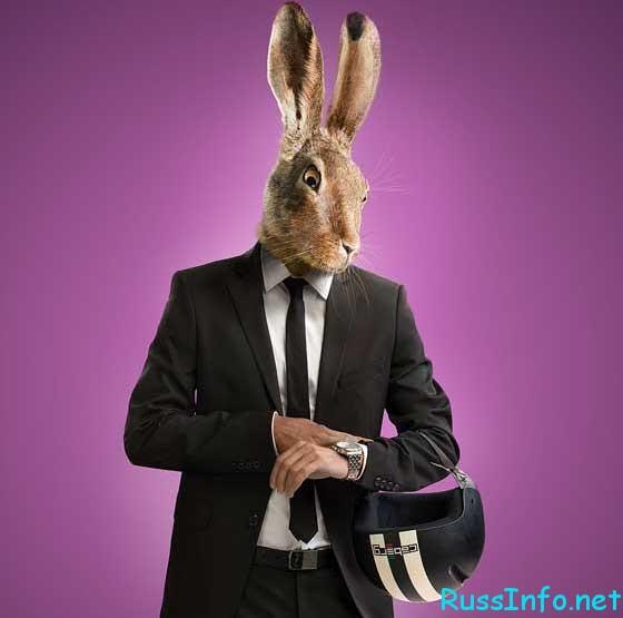 гороскоп мужчины Кролика на 2019 год