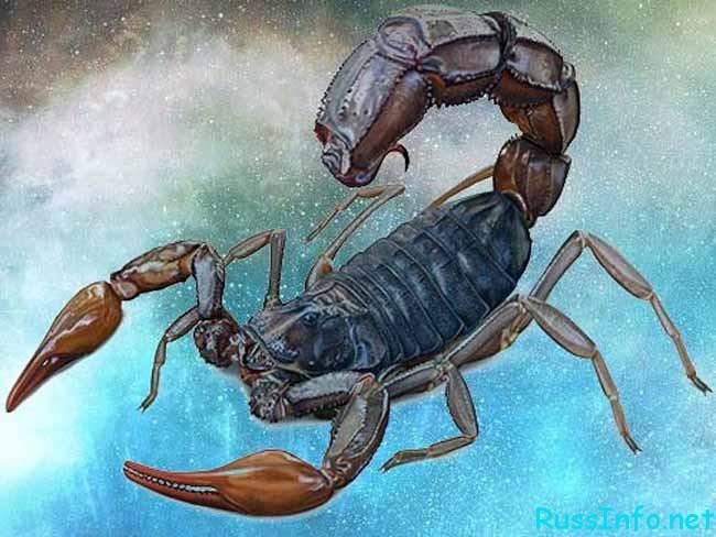 Гороскоп Здоровья Скорпиона На Ноябрь