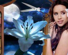 лунный календарь для стрижек (стрижки) волос на ноябрь