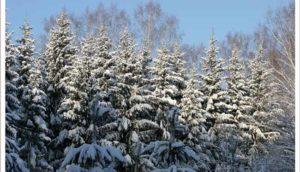 прогноз на зиму 2016–2017 в Сибири