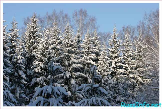 прогноз на зиму 2018–2019 в Сибири
