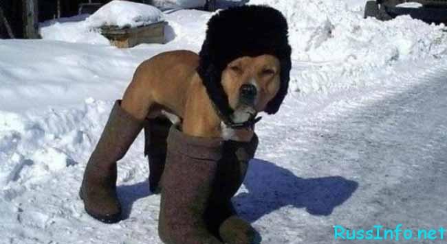 какой будет зима 2018-2019 года в России по прогнозам синоптиков